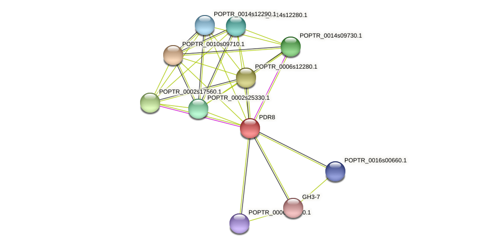 POPTR_0001s19030.1 protein (Populus trichocarpa) - STRING interaction network