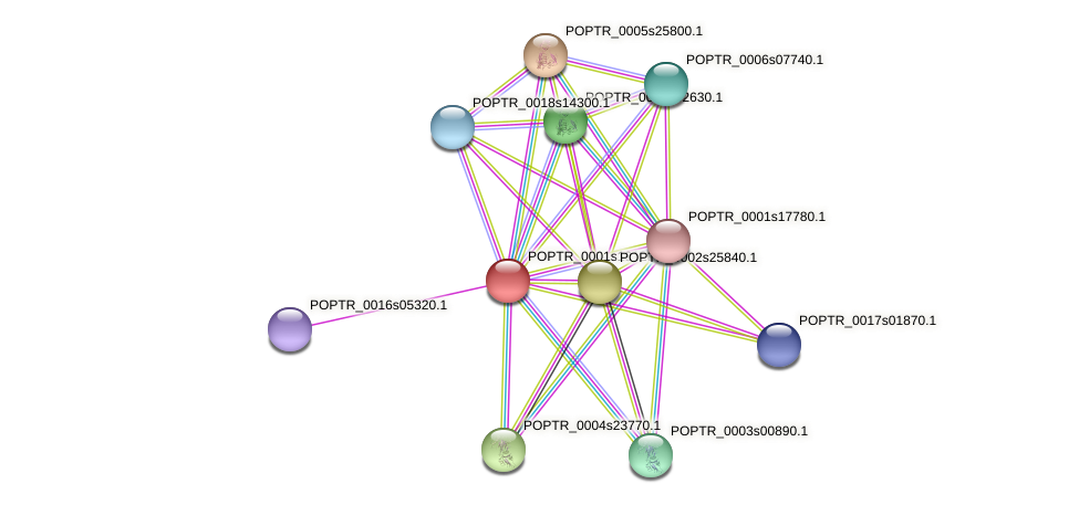 POPTR_0001s19120.1 protein (Populus trichocarpa) - STRING interaction network