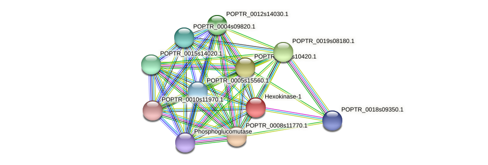 POPTR_0001s19130.1 protein (Populus trichocarpa) - STRING interaction network
