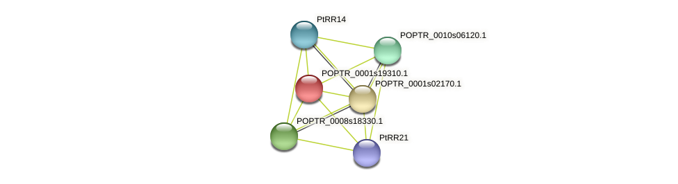 POPTR_0001s19310.1 protein (Populus trichocarpa) - STRING interaction network