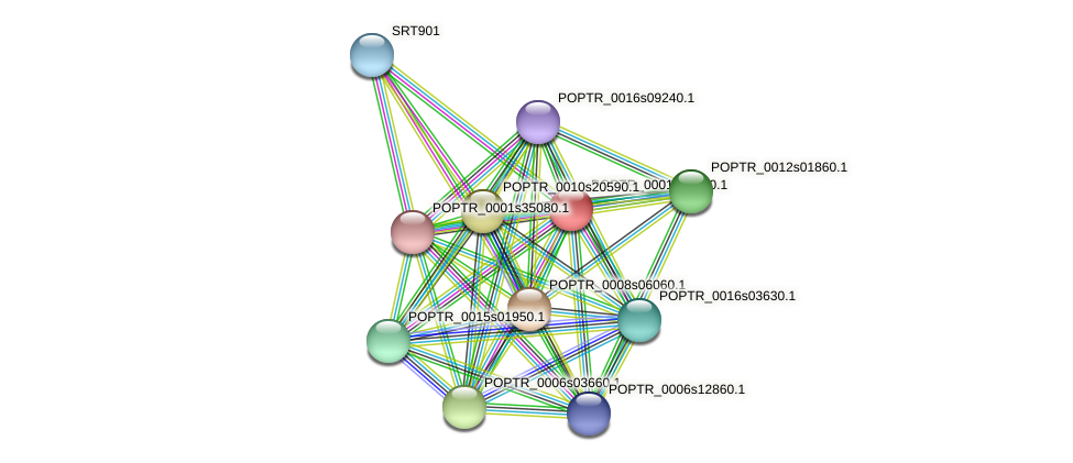 POPTR_0001s19430.1 protein (Populus trichocarpa) - STRING interaction network