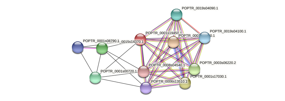 POPTR_0001s19450.1 protein (Populus trichocarpa) - STRING interaction network