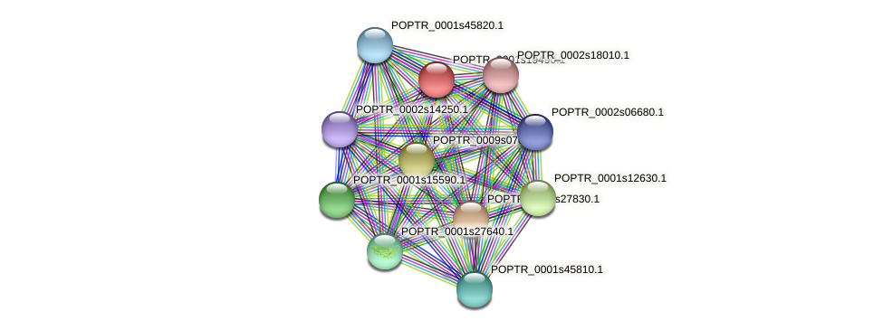 POPTR_0001s19490.1 protein (Populus trichocarpa) - STRING interaction network