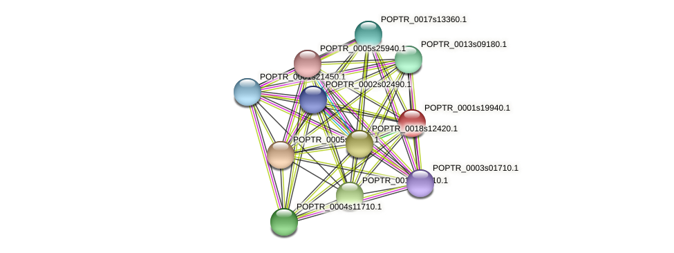 POPTR_0001s19940.1 protein (Populus trichocarpa) - STRING interaction network