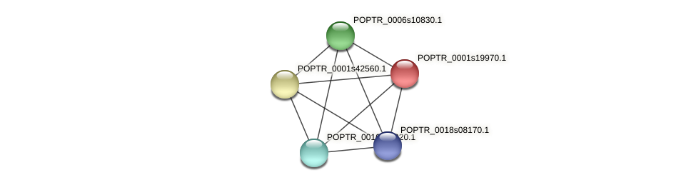 POPTR_0001s19970.1 protein (Populus trichocarpa) - STRING interaction network