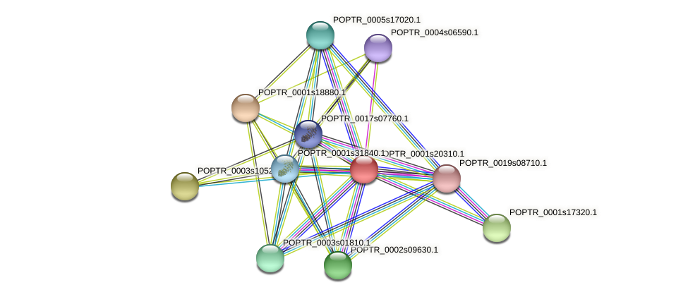 POPTR_0001s20310.1 protein (Populus trichocarpa) - STRING interaction network