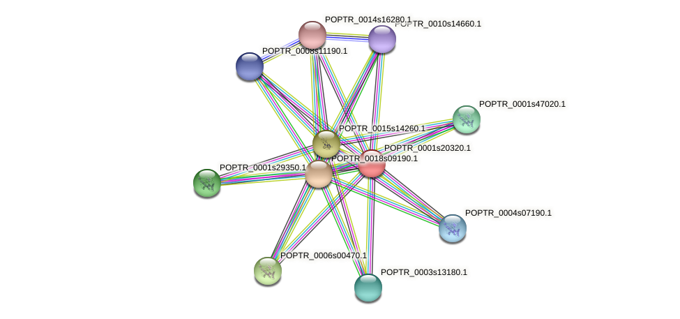 POPTR_0001s20320.1 protein (Populus trichocarpa) - STRING interaction network