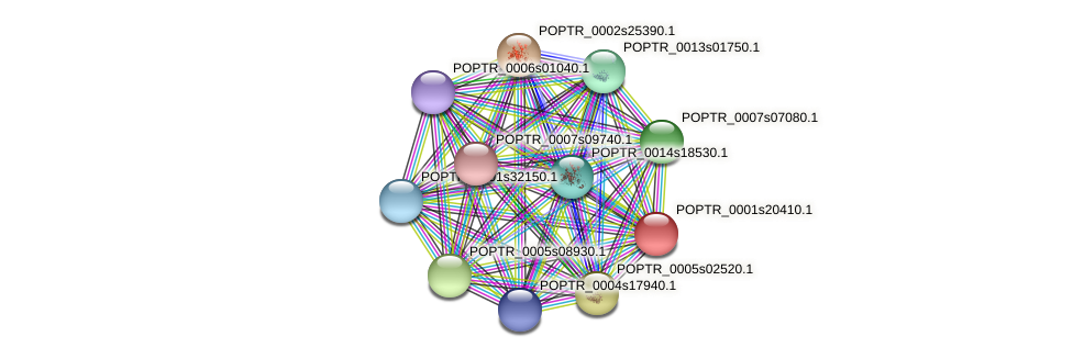 POPTR_0001s20410.1 protein (Populus trichocarpa) - STRING interaction network