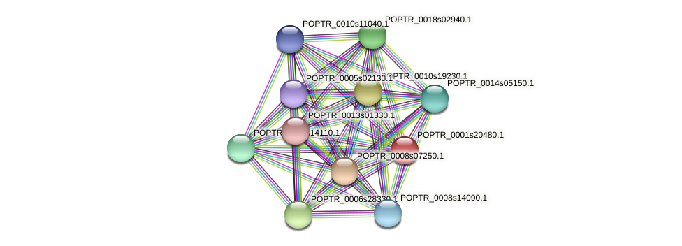 POPTR_0001s20480.1 protein (Populus trichocarpa) - STRING interaction network