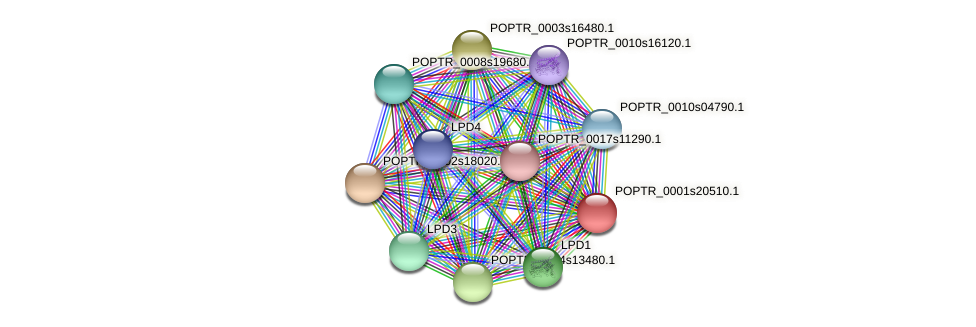POPTR_0001s20510.1 protein (Populus trichocarpa) - STRING interaction network