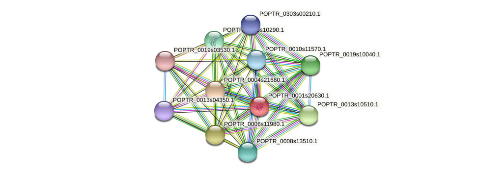 POPTR_0001s20630.1 protein (Populus trichocarpa) - STRING interaction network