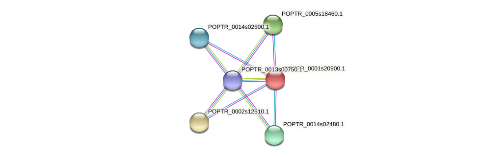 POPTR_0001s20900.1 protein (Populus trichocarpa) - STRING interaction network