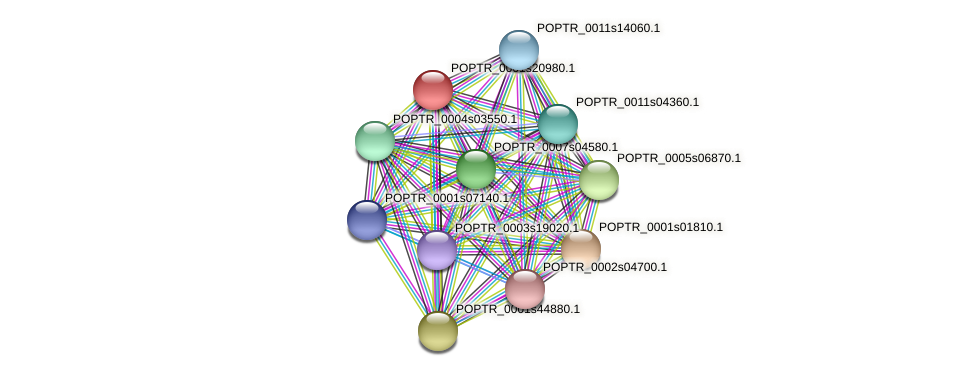 POPTR_0001s20980.1 protein (Populus trichocarpa) - STRING interaction network