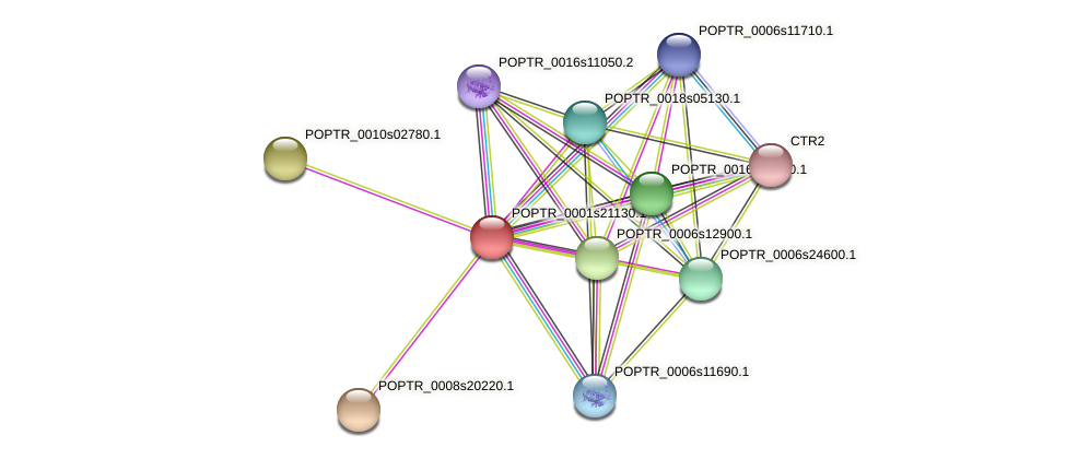 POPTR_0001s21130.1 protein (Populus trichocarpa) - STRING interaction network