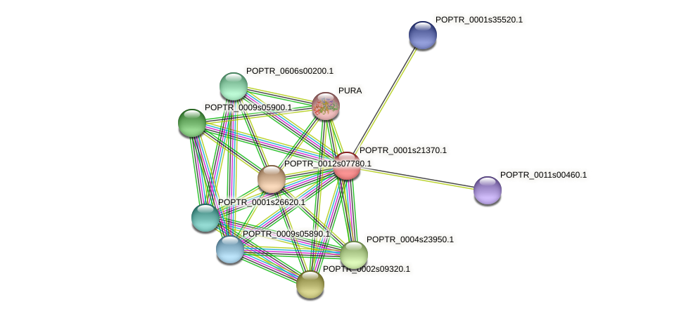 POPTR_0001s21370.1 protein (Populus trichocarpa) - STRING interaction network