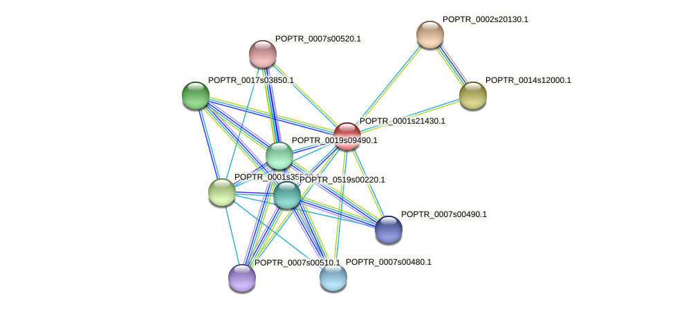 POPTR_0001s21430.1 protein (Populus trichocarpa) - STRING interaction network