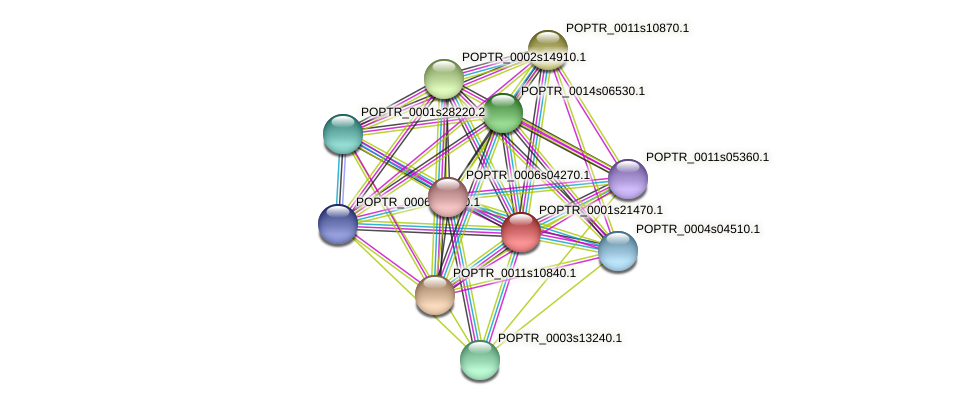 POPTR_0001s21470.1 protein (Populus trichocarpa) - STRING interaction network