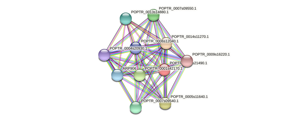 POPTR_0001s21490.1 protein (Populus trichocarpa) - STRING interaction network