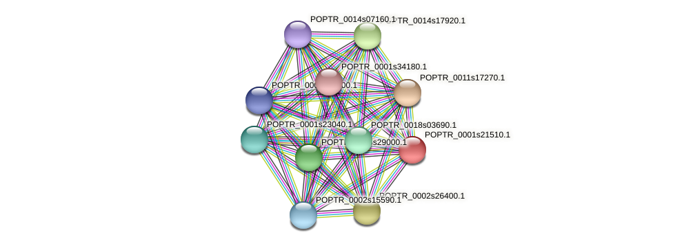 POPTR_0001s21510.1 protein (Populus trichocarpa) - STRING interaction network
