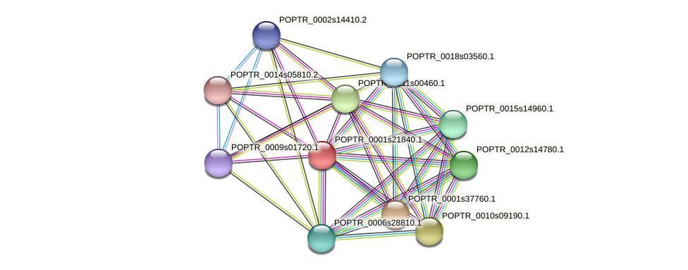 POPTR_0001s21840.1 protein (Populus trichocarpa) - STRING interaction network