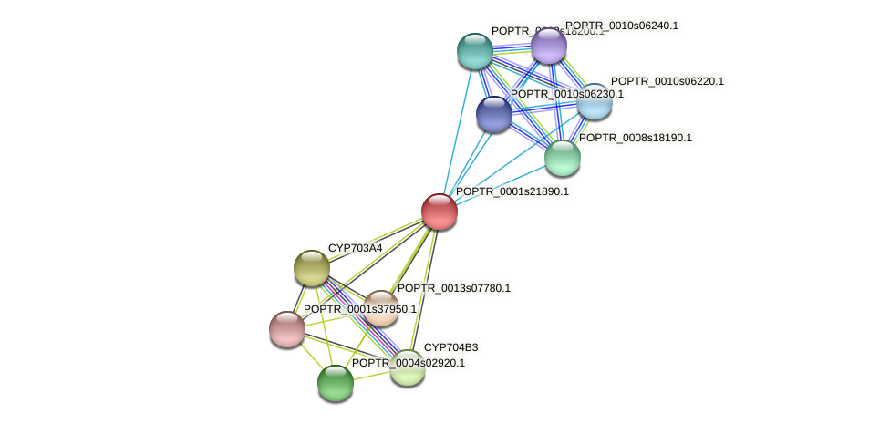 POPTR_0001s21890.1 protein (Populus trichocarpa) - STRING interaction network