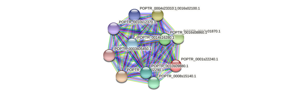POPTR_0001s22240.1 protein (Populus trichocarpa) - STRING interaction network