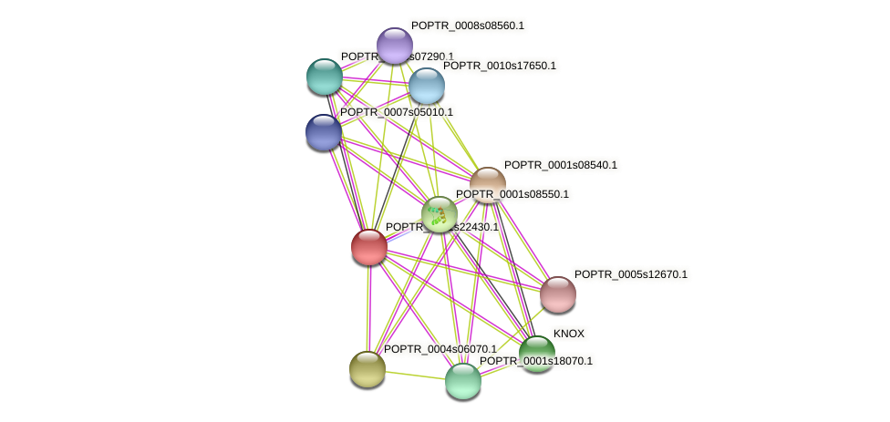 POPTR_0001s22430.1 protein (Populus trichocarpa) - STRING interaction network