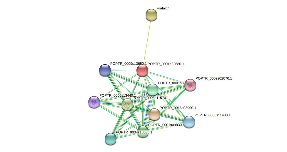 POPTR_0001s22680.1 protein (Populus trichocarpa) - STRING interaction network