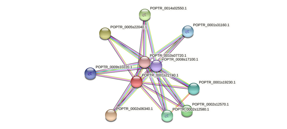POPTR_0001s22740.1 protein (Populus trichocarpa) - STRING interaction network