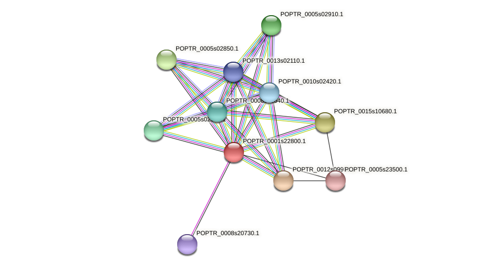 POPTR_0001s22800.1 protein (Populus trichocarpa) - STRING interaction network