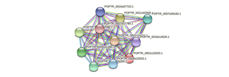 POPTR_0001s23020.1 protein (Populus trichocarpa) - STRING interaction network