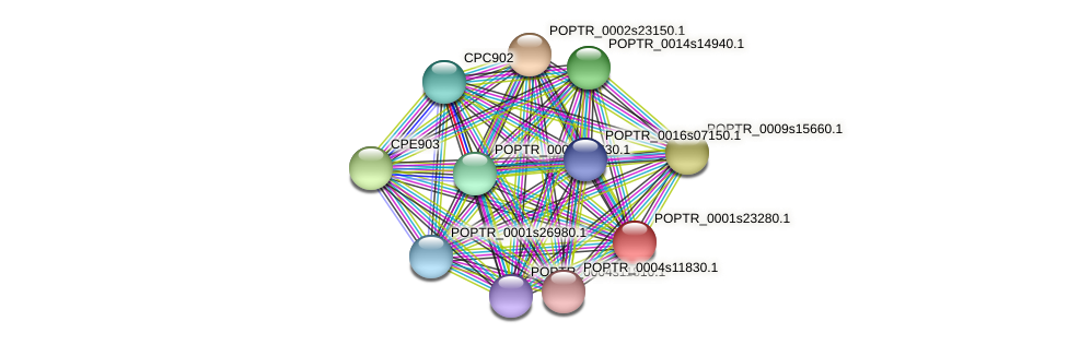 POPTR_0001s23280.1 protein (Populus trichocarpa) - STRING interaction network