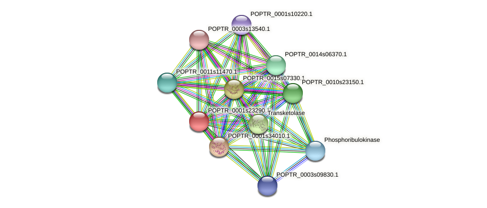 POPTR_0001s23290.1 protein (Populus trichocarpa) - STRING interaction network