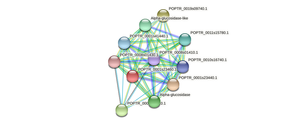POPTR_0001s23460.1 protein (Populus trichocarpa) - STRING interaction network