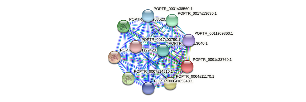 POPTR_0001s23760.1 protein (Populus trichocarpa) - STRING interaction network