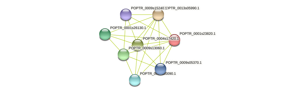 POPTR_0001s23820.1 protein (Populus trichocarpa) - STRING interaction network