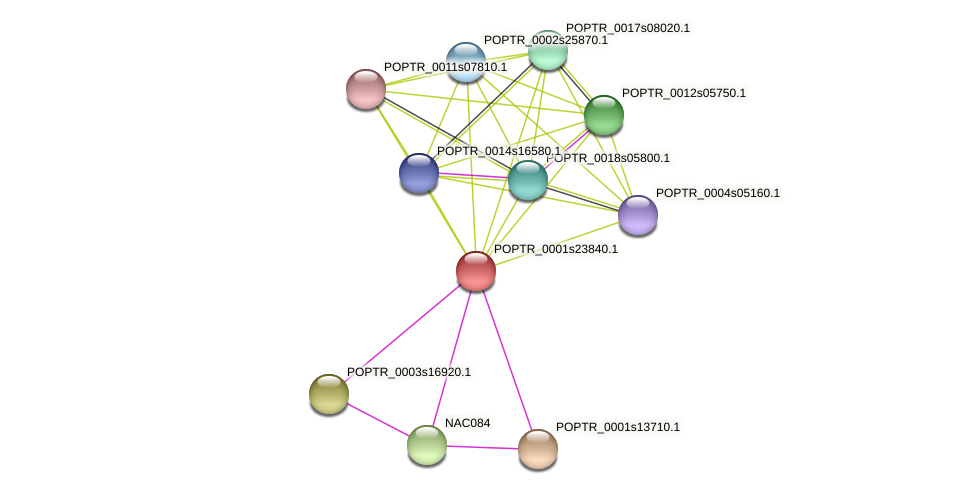 POPTR_0001s23840.1 protein (Populus trichocarpa) - STRING interaction network