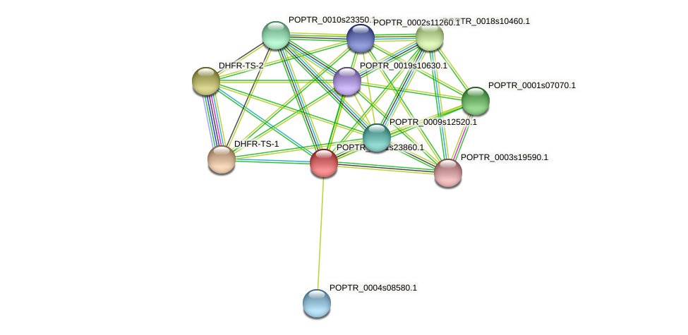 POPTR_0001s23860.1 protein (Populus trichocarpa) - STRING interaction network