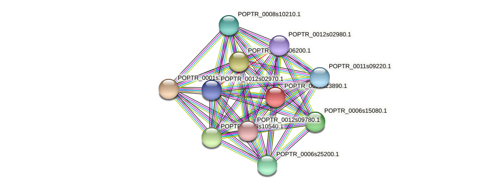 POPTR_0001s23890.1 protein (Populus trichocarpa) - STRING interaction network