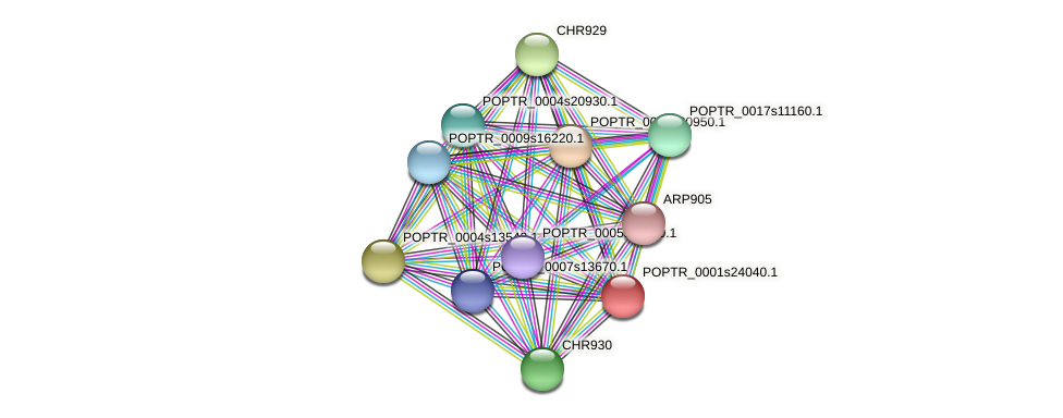 POPTR_0001s24040.1 protein (Populus trichocarpa) - STRING interaction network