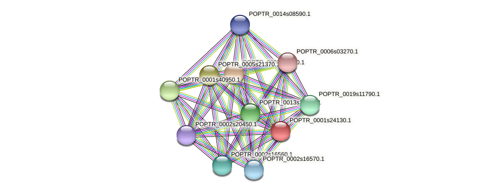 POPTR_0001s24130.1 protein (Populus trichocarpa) - STRING interaction network