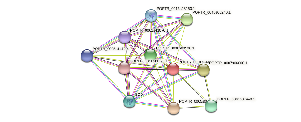 POPTR_0001s24140.1 protein (Populus trichocarpa) - STRING interaction network