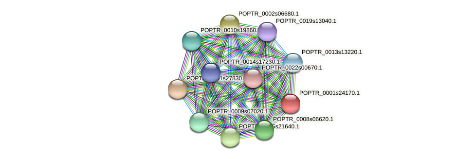 POPTR_0001s24170.1 protein (Populus trichocarpa) - STRING interaction network