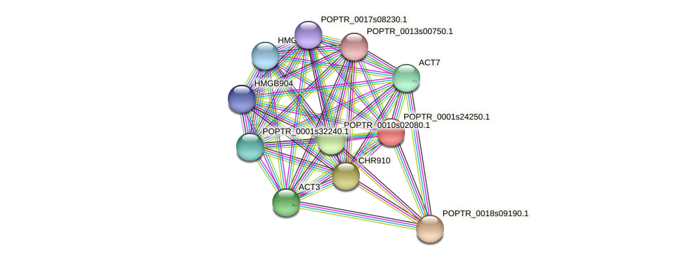 POPTR_0001s24250.1 protein (Populus trichocarpa) - STRING interaction network