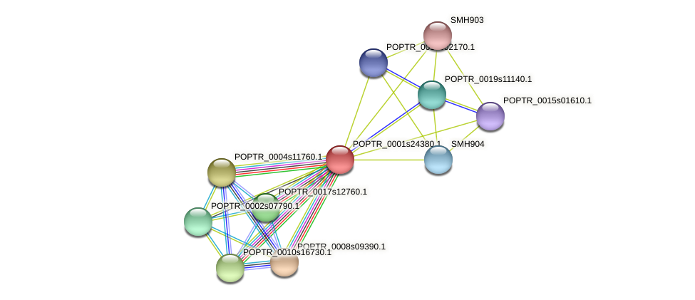 POPTR_0001s24380.1 protein (Populus trichocarpa) - STRING interaction network