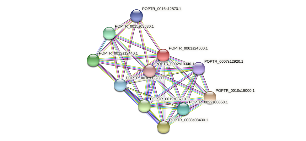 POPTR_0001s24500.1 protein (Populus trichocarpa) - STRING interaction network