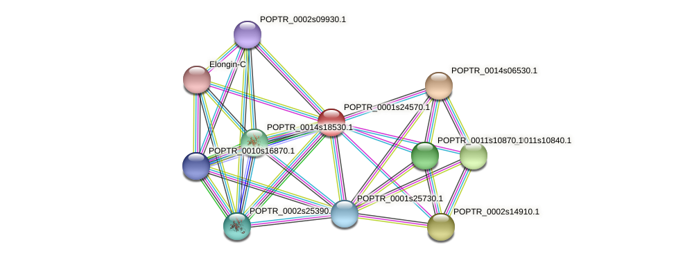 POPTR_0001s24570.1 protein (Populus trichocarpa) - STRING interaction network
