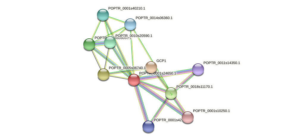 POPTR_0001s24650.1 protein (Populus trichocarpa) - STRING interaction network