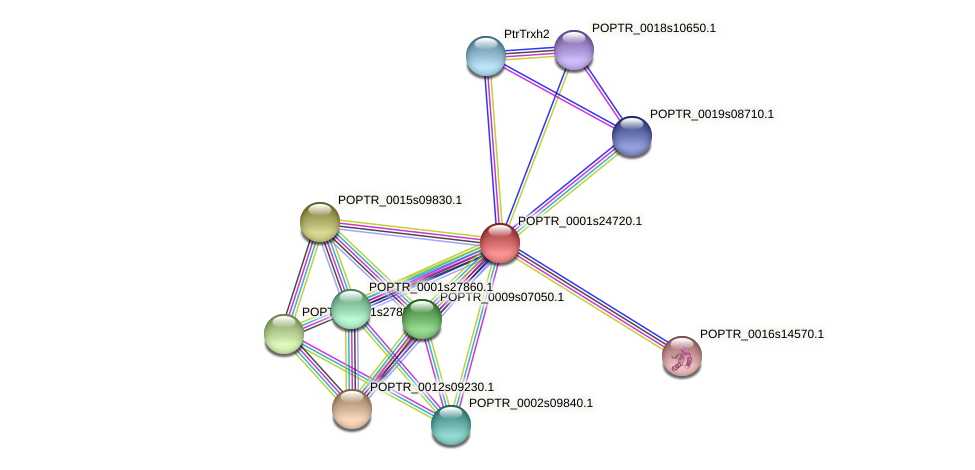 POPTR_0001s24720.1 protein (Populus trichocarpa) - STRING interaction network