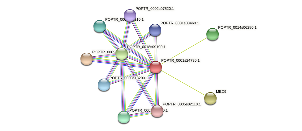 POPTR_0001s24730.1 protein (Populus trichocarpa) - STRING interaction network